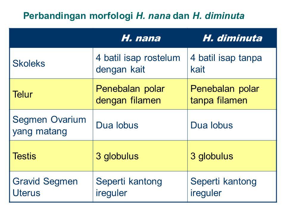 Perbandingan morfologi H. nana dan H. diminuta H. nanaH. diminuta Skoleks 4 batil isap rostelum dengan kait 4 batil isap tanpa kait Telur Penebalan po