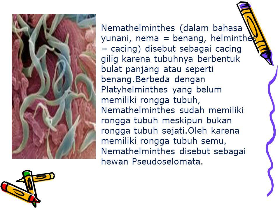 Enterobius-vermicularis adalah nama lain dari cacing kremi.