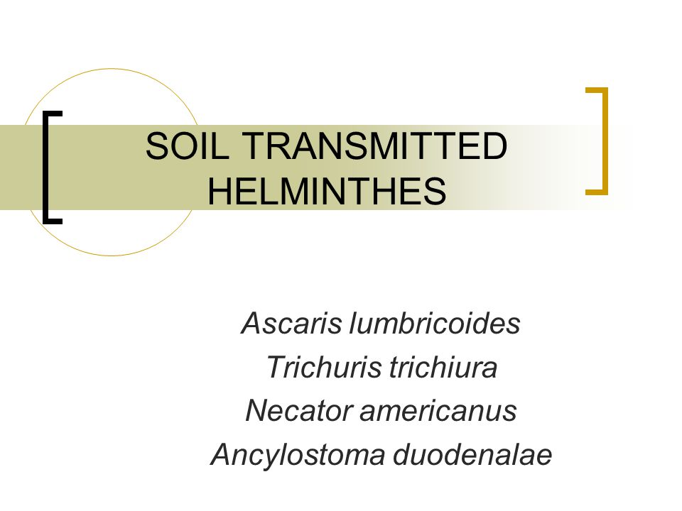 SOIL TRANSMITTED HELMINTHES Ascaris lumbricoides Trichuris trichiura Necator americanus Ancylostoma duodenalae