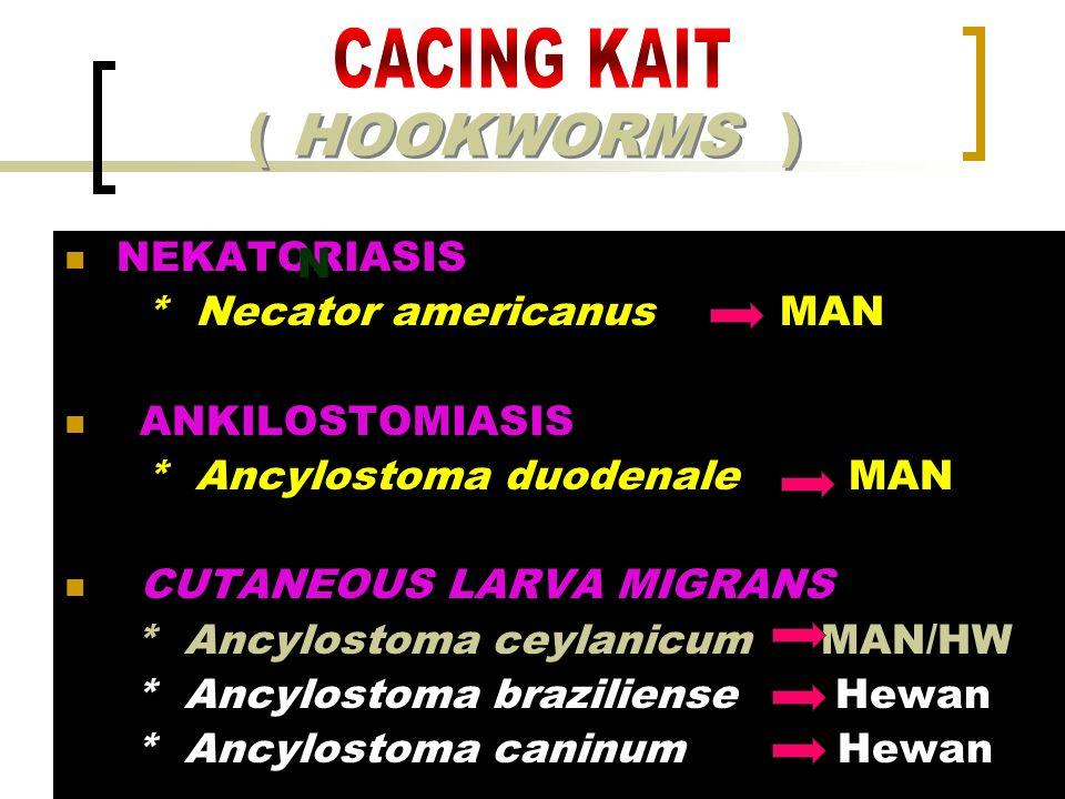 ( HOOKWORMS ) NEKATORIASIS * Necator americanus MAN ANKILOSTOMIASIS * Ancylostoma duodenale MAN CUTANEOUS LARVA MIGRANS * Ancylostoma ceylanicum MAN/H