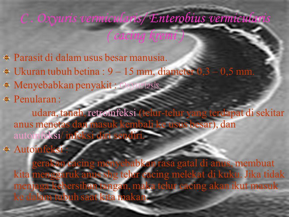 Daur hidup : telur (keluar bersama feses) → menetas menjadi larfa Rhabditiform → berubah mjd larfa Filariform → menginfeksi tubuh inang melalui kulit