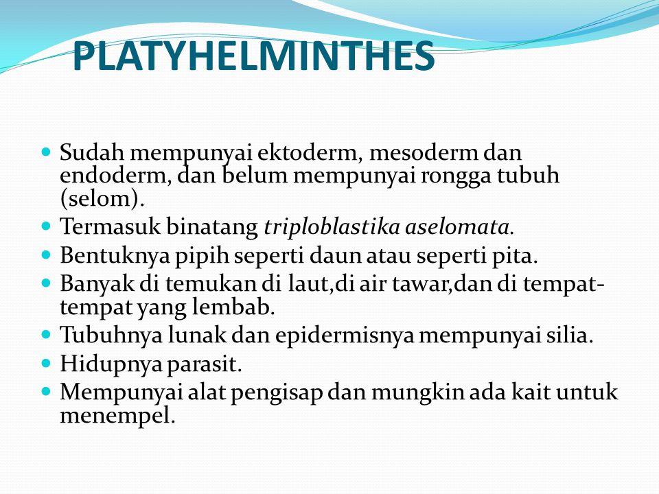 PLATYHELMINTHES Sudah mempunyai ektoderm, mesoderm dan endoderm, dan belum mempunyai rongga tubuh (selom).