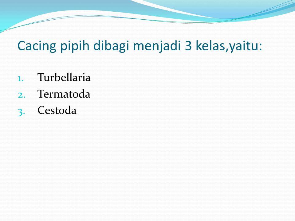 Cacing pipih dibagi menjadi 3 kelas,yaitu: 1. Turbellaria 2. Termatoda 3. Cestoda