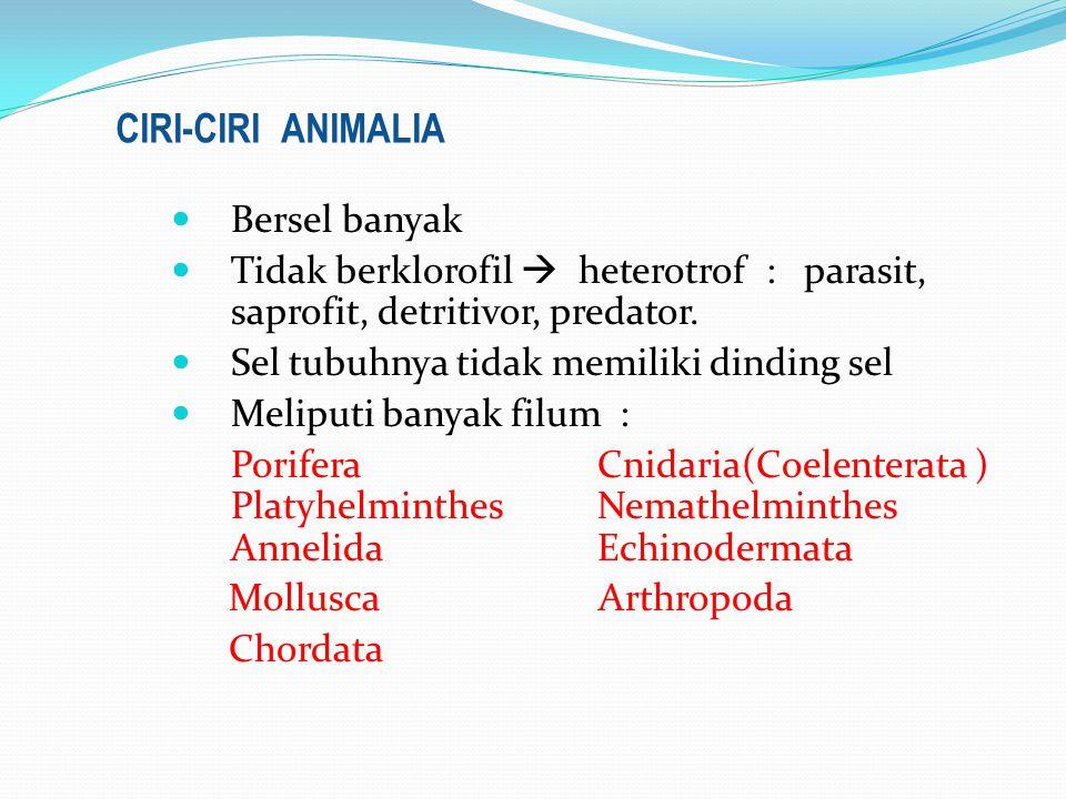 Bersel banyak Tidak berklorofil  heterotrof : parasit, saprofit, detritivor, predator.