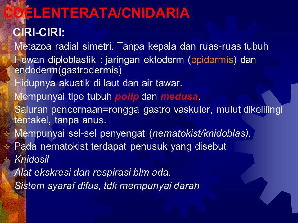 COELENTERATA/CNIDARIA CIRI-CIRI:  Metazoa radial simetri. Tanpa kepala dan ruas-ruas tubuh  Hewan diploblastik : jaringan ektoderm (epidermis) dan e