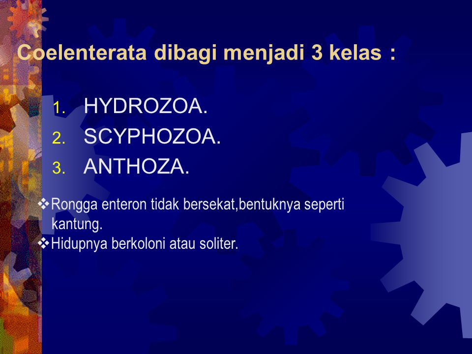 Coelenterata dibagi menjadi 3 kelas : 1. HYDROZOA. 2. SCYPHOZOA. 3. ANTHOZA.  Rongga enteron tidak bersekat,bentuknya seperti kantung.  Hidupnya ber