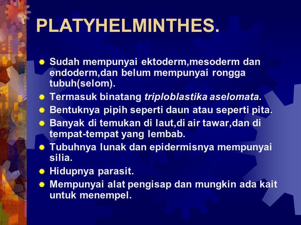 PLATYHELMINTHES.
