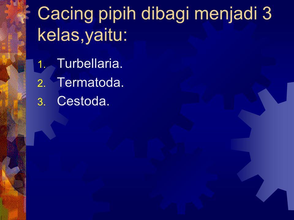 Cacing pipih dibagi menjadi 3 kelas,yaitu: 1. Turbellaria. 2. Termatoda. 3. Cestoda.