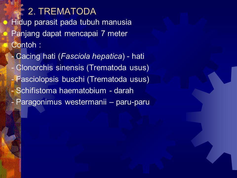 2. TREMATODA  Hidup parasit pada tubuh manusia  Panjang dapat mencapai 7 meter  Contoh : - Cacing hati (Fasciola hepatica) - hati - Clonorchis sine