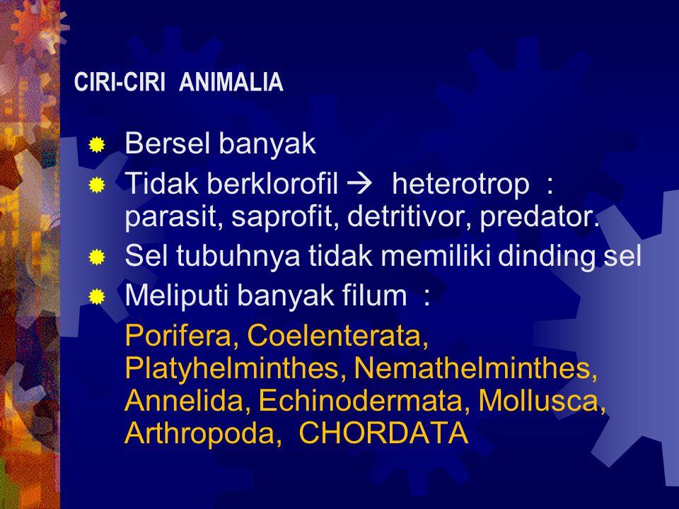  Bersel banyak  Tidak berklorofil  heterotrop : parasit, saprofit, detritivor, predator.  Sel tubuhnya tidak memiliki dinding sel  Meliputi banya