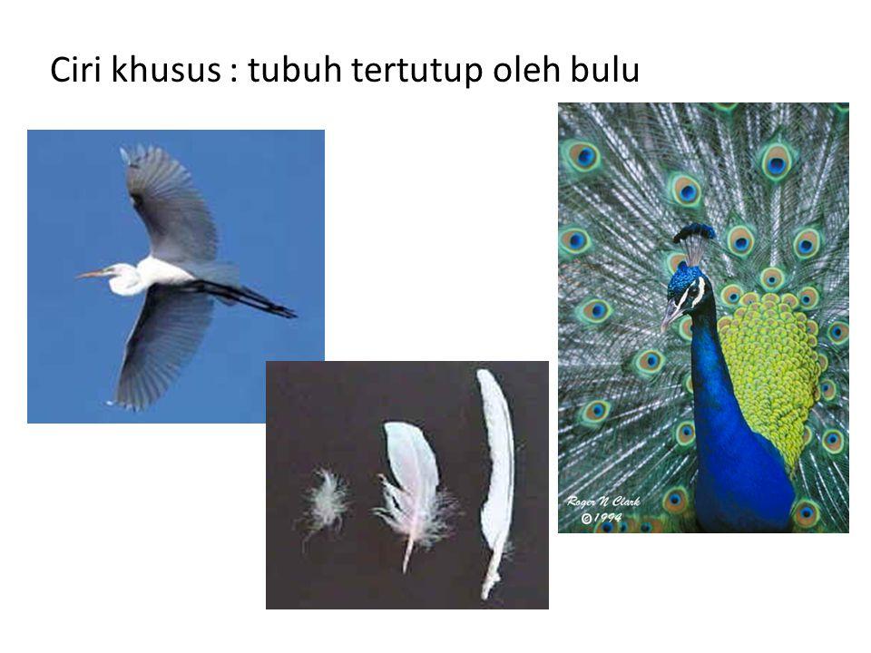 Ciri khusus : tubuh tertutup oleh bulu