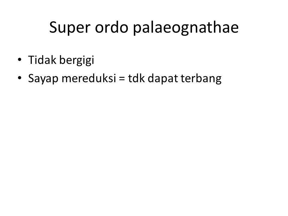 Super ordo palaeognathae Tidak bergigi Sayap mereduksi = tdk dapat terbang
