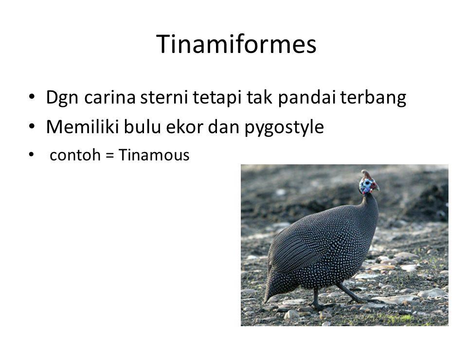 Tinamiformes Dgn carina sterni tetapi tak pandai terbang Memiliki bulu ekor dan pygostyle contoh = Tinamous