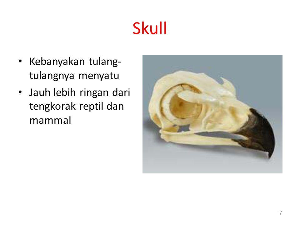 Skull Kebanyakan tulang- tulangnya menyatu Jauh lebih ringan dari tengkorak reptil dan mammal 7