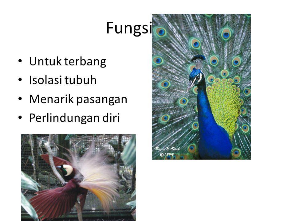 Fungsi bulu Untuk terbang Isolasi tubuh Menarik pasangan Perlindungan diri