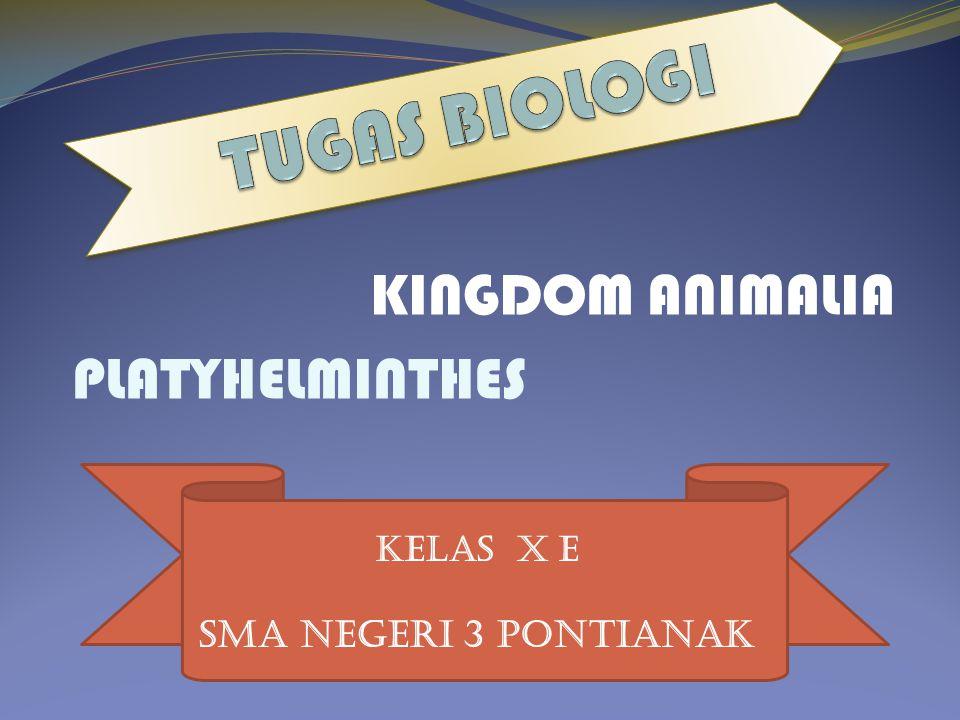 KELAS X E KINGDOM ANIMALIA PLATYHELMINTHES SMA NEGERI 3 PONTIANAK