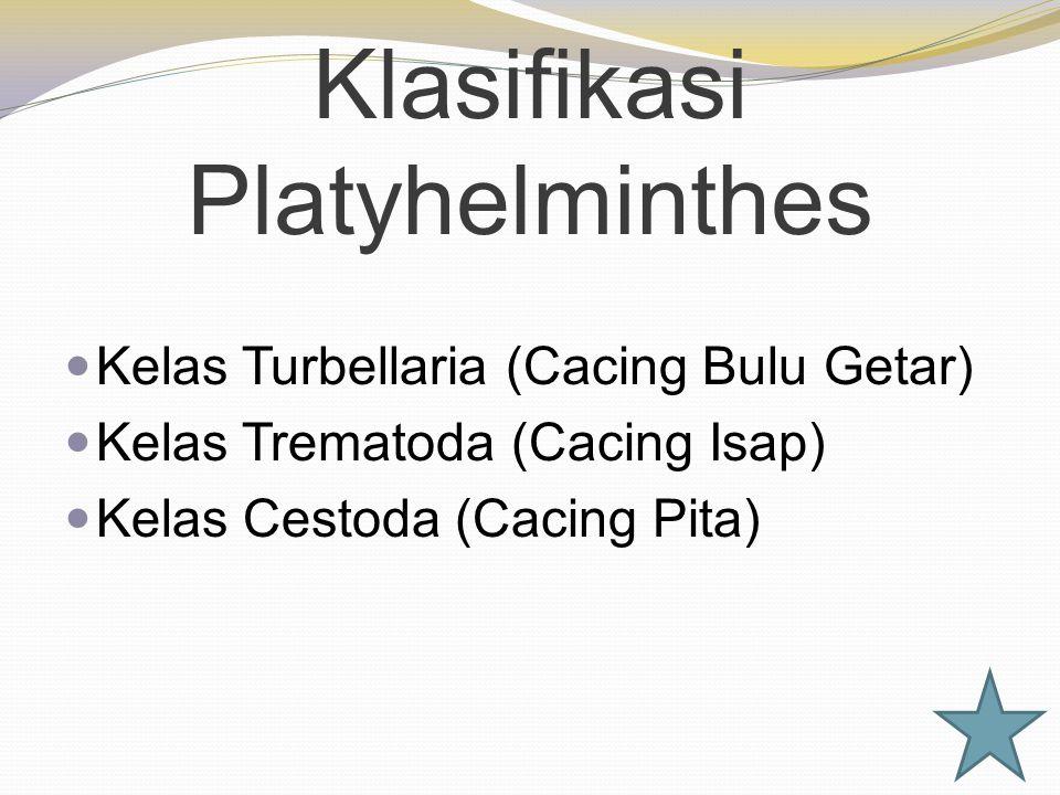 Klasifikasi Platyhelminthes Kelas Turbellaria (Cacing Bulu Getar) Kelas Trematoda (Cacing Isap) Kelas Cestoda (Cacing Pita)