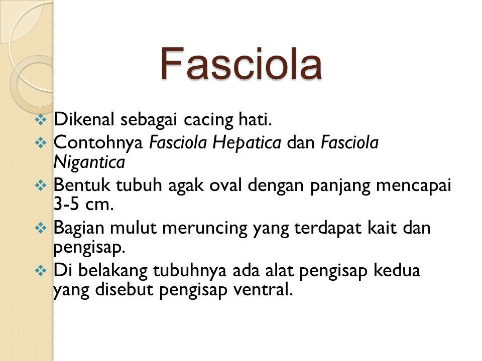 Fasciola  Dikenal sebagai cacing hati.  Contohnya Fasciola Hepatica dan Fasciola Nigantica  Bentuk tubuh agak oval dengan panjang mencapai 3-5 cm.