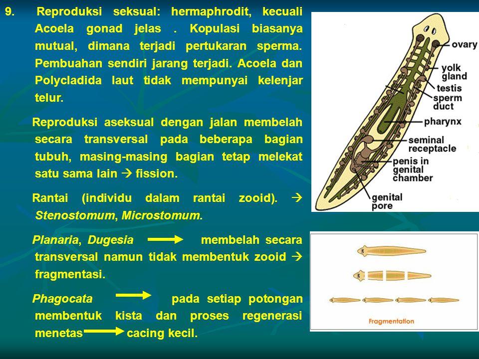 9. Reproduksi seksual: hermaphrodit, kecuali Acoela gonad jelas. Kopulasi biasanya mutual, dimana terjadi pertukaran sperma. Pembuahan sendiri jarang