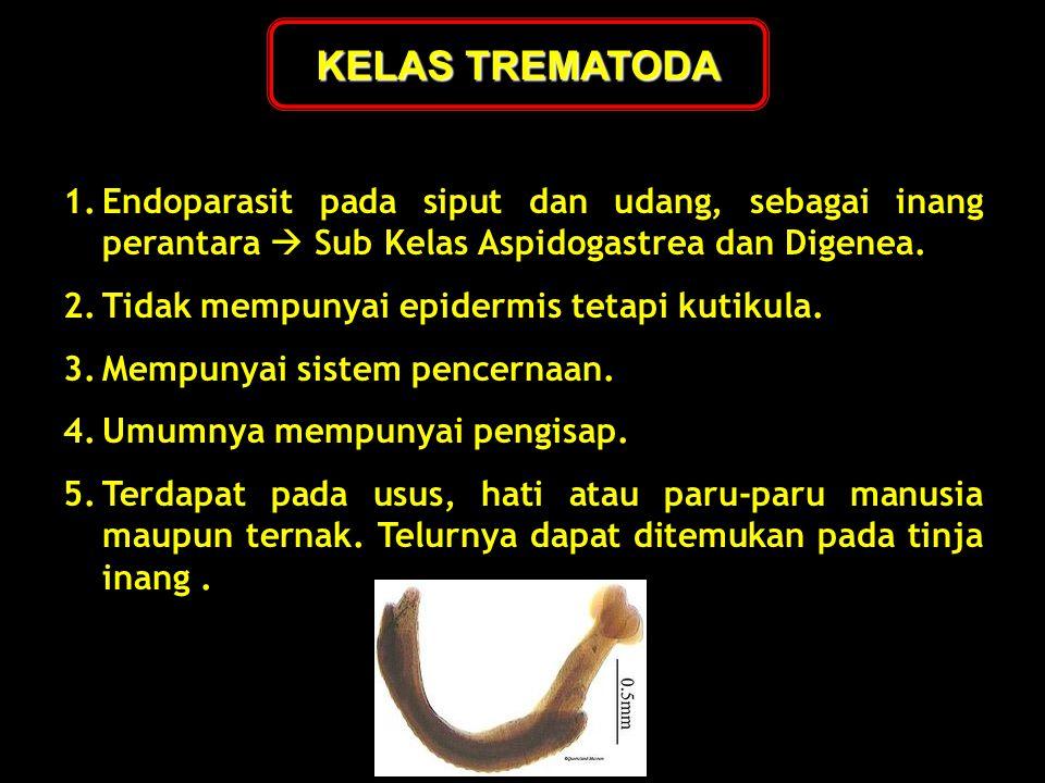 1.Endoparasit pada siput dan udang, sebagai inang perantara  Sub Kelas Aspidogastrea dan Digenea. 2.Tidak mempunyai epidermis tetapi kutikula. 3.Memp