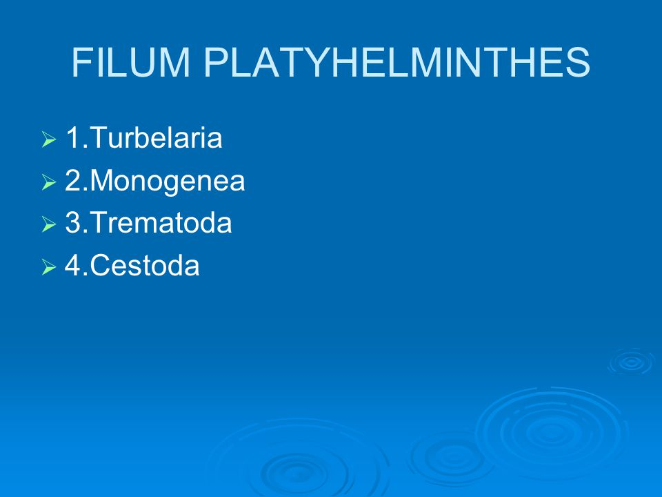 FILUM PLATYHELMINTHES   1.Turbelaria   2.Monogenea   3.Trematoda   4.Cestoda