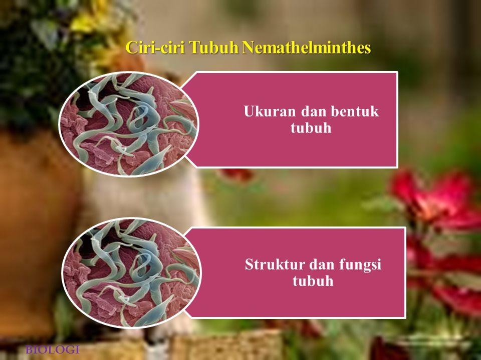 Nemathelminthes (dalam bahasa yunani, nema = benang, helminthes = cacing) disebut sebagai cacing gilig karan tubuhnya berbentuk bulat panjang atau seperti benang.Berbeda dengan Platyhelminthes yang belum memiliki rongga tubuh, Nemathelminthes sudah memiliki rongga tubuh meskipun bukan rongga tubuh sejati.Oleh karena memiliki rongga tubuh semu, Nemathelminthes disebut sebagai hewan Pseudoselomata BIOLOGI
