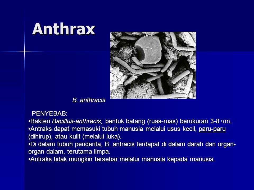 Anthrax PENYEBAB: Bakteri Bacillus-anthracis; bentuk batang (ruas-ruas) berukuran 3-8 чm.
