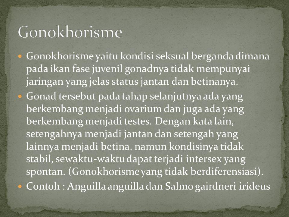 Gonokhorisme yaitu kondisi seksual berganda dimana pada ikan fase juvenil gonadnya tidak mempunyai jaringan yang jelas status jantan dan betinanya. Go