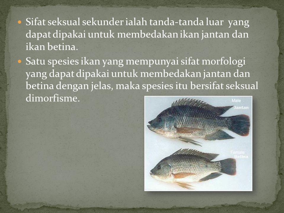 Sifat seksual sekunder ialah tanda-tanda luar yang dapat dipakai untuk membedakan ikan jantan dan ikan betina. Satu spesies ikan yang mempunyai sifat
