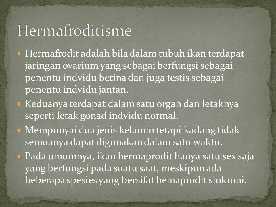 Hermafrodit adalah bila dalam tubuh ikan terdapat jaringan ovarium yang sebagai berfungsi sebagai penentu indvidu betina dan juga testis sebagai penen