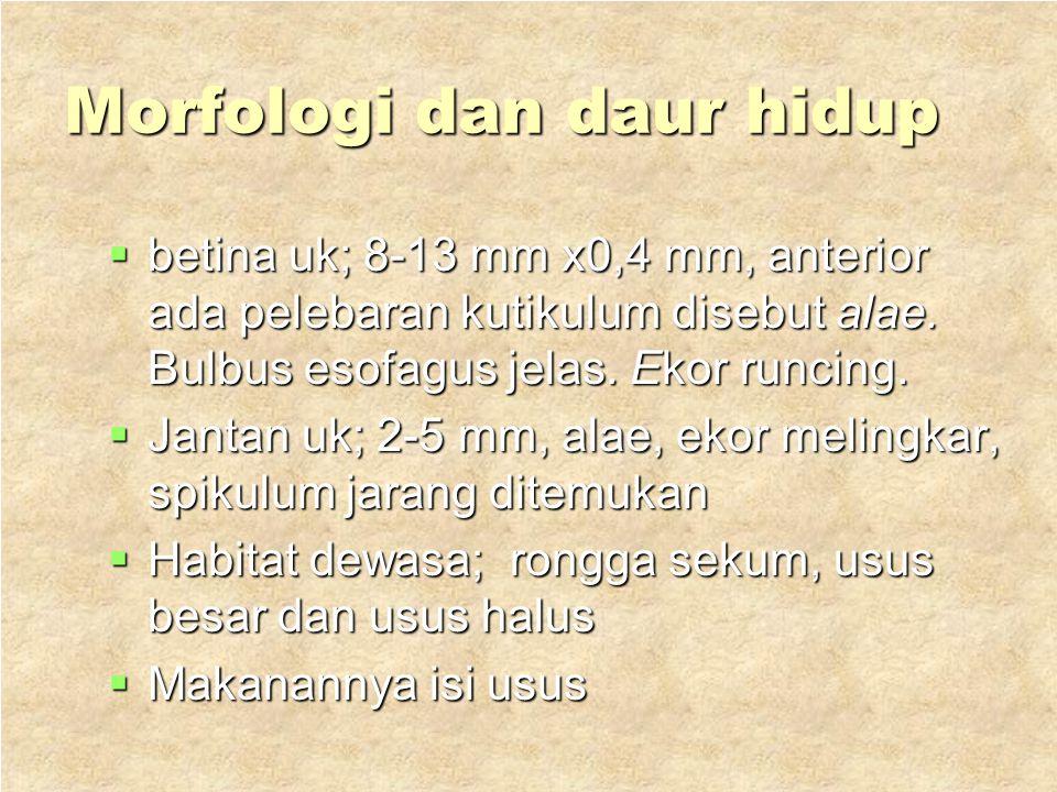 5. Oxyuris vermicularis Hospes : manusia Hospes : manusia Penyakit : enterobiasis atau oksiuriasis Penyakit : enterobiasis atau oksiuriasis Distribusi