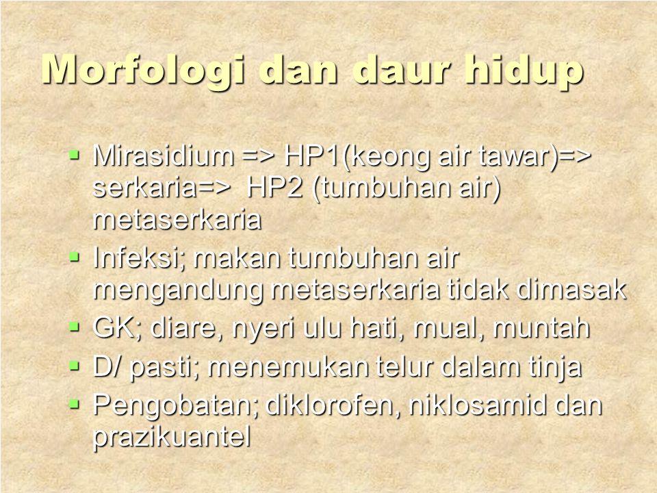 3.Fasciolopsis buski  Hospes; manusia dan babi  Penyakit ; fasiolopsiasis  Distr ; RRc, Taiwan, Vietnam, Thailand, India dan Indonesia  Morfologi