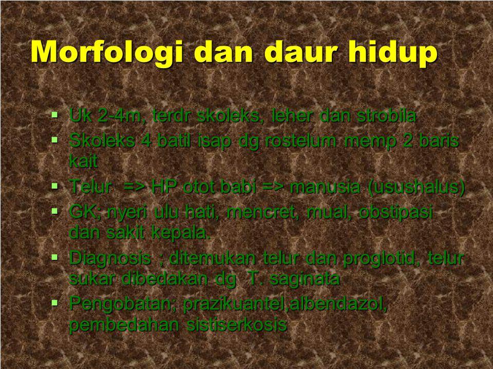 2. Taenia solium  Cacing pita daging babi  Hospes definitif ; manusia  Hospes perantara ; manusia dan babi  Penyakit ; cacing dewasa => teniasis s