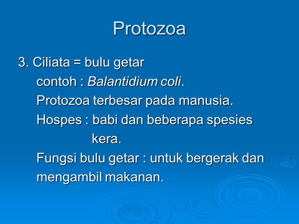 Protozoa 2. Mastigophora = flagellata : protozoa yang mempunyai flagel (cambuk) tddr 2 gol : I. Flagelata traktus digestivus : yg hidup di I. Flagelat