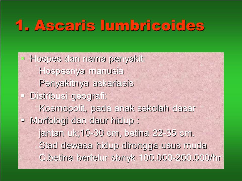 "NEMATODA USUS  Spesies yang ditularkan melalui tanah disebut ""soil transmitted helminths"" yang terpenting : Ascaris lumbricoides Ascaris lumbricoides"