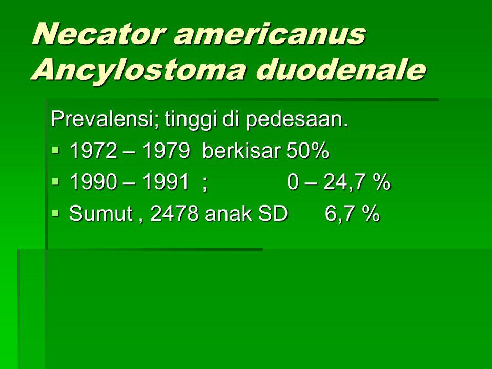 Necator americanus Ancylostoma duodenale Necator americanus Ancylostoma duodenale  Sejarah; cacing tambang ditemukan di Eropa pd pekerja tambang.  H