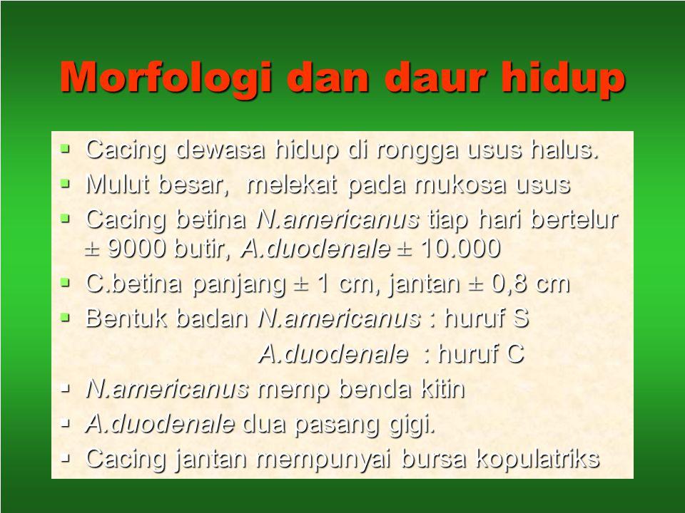 Necator americanus Ancylostoma duodenale Prevalensi; tinggi di pedesaan.  1972 – 1979 berkisar 50%  1990 – 1991 ; 0 – 24,7 %  Sumut, 2478 anak SD 6