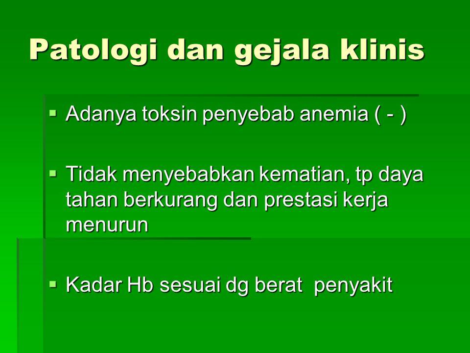 Patologi dan gejala klinis Gejala tgt pd:  Spesies dan jumlah cacing  Keadaan gizi ( Fe dan protein ) N.americanus; kehilangan darah 0,005 – 0,1cc A