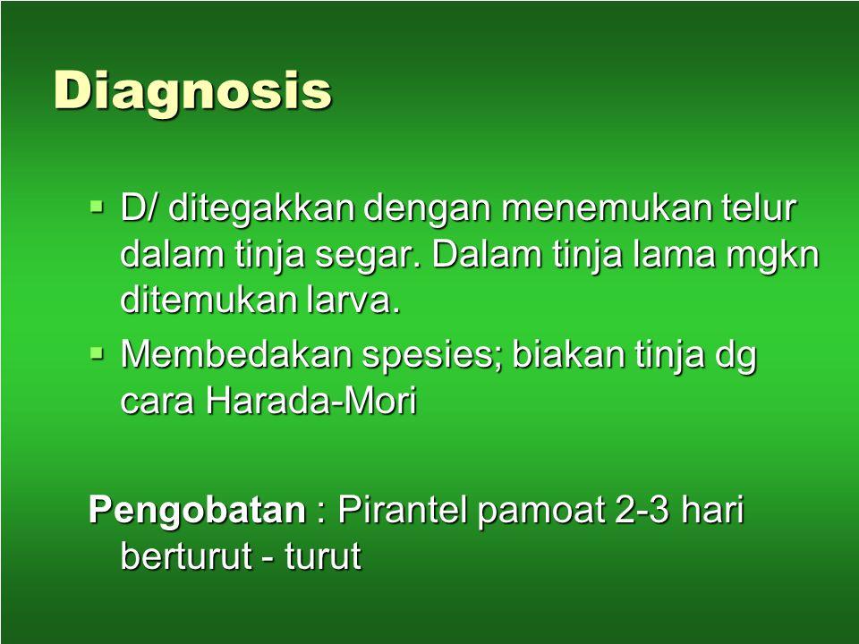 Patologi dan gejala klinis  Adanya toksin penyebab anemia ( - )  Tidak menyebabkan kematian, tp daya tahan berkurang dan prestasi kerja menurun  Ka