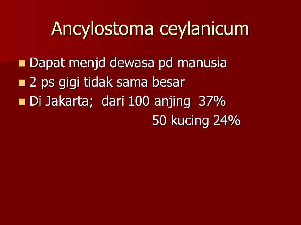 diagnosis 1. Gambaran klinis khas 2. Biopsi Pengobatan; 1. Semprotan kloretil 2. Albendazol, do tunggal 400mg 3 hr. Anak < 2th albendazol salep 2%. An