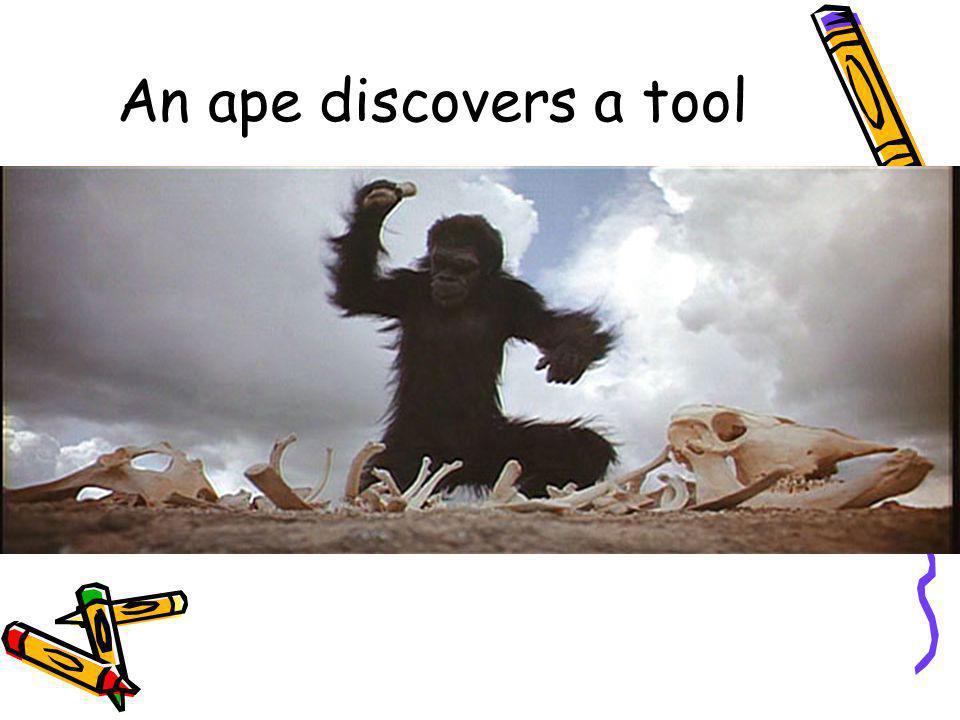 An ape discovers a tool