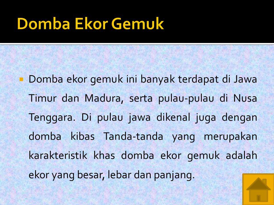  Domba ekor gemuk ini banyak terdapat di Jawa Timur dan Madura, serta pulau-pulau di Nusa Tenggara.