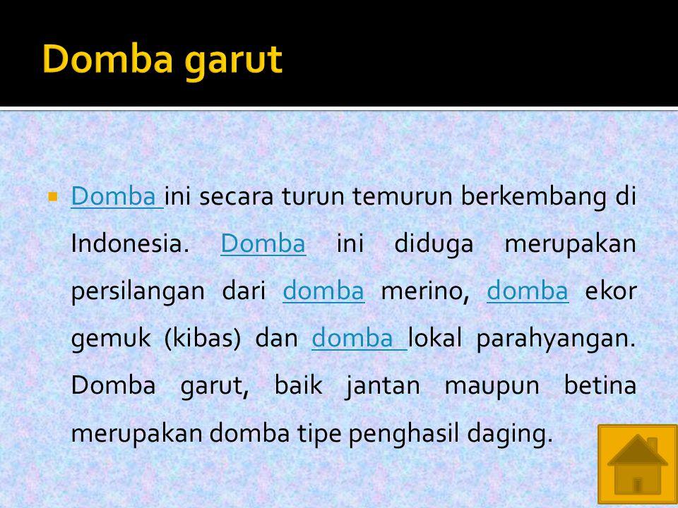  Domba ini secara turun temurun berkembang di Indonesia.