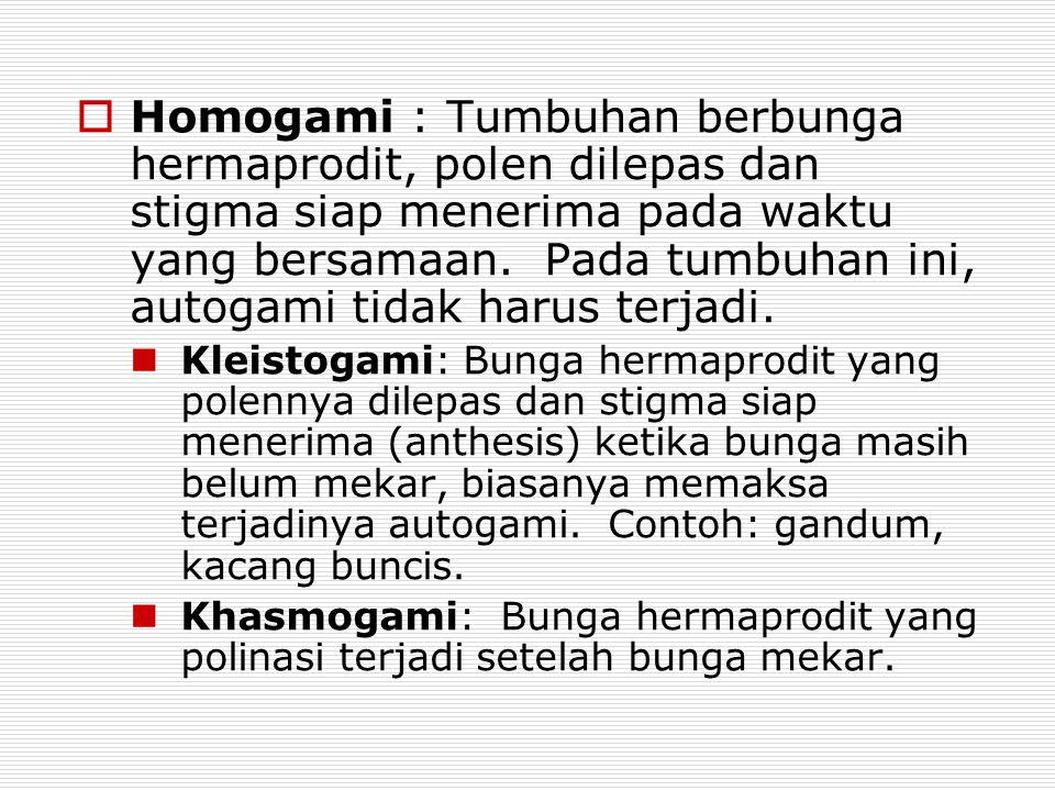  Homogami : Tumbuhan berbunga hermaprodit, polen dilepas dan stigma siap menerima pada waktu yang bersamaan. Pada tumbuhan ini, autogami tidak harus
