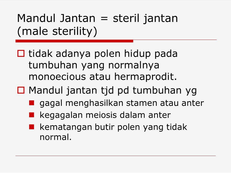 Mandul Jantan = steril jantan (male sterility)  tidak adanya polen hidup pada tumbuhan yang normalnya monoecious atau hermaprodit.  Mandul jantan tj
