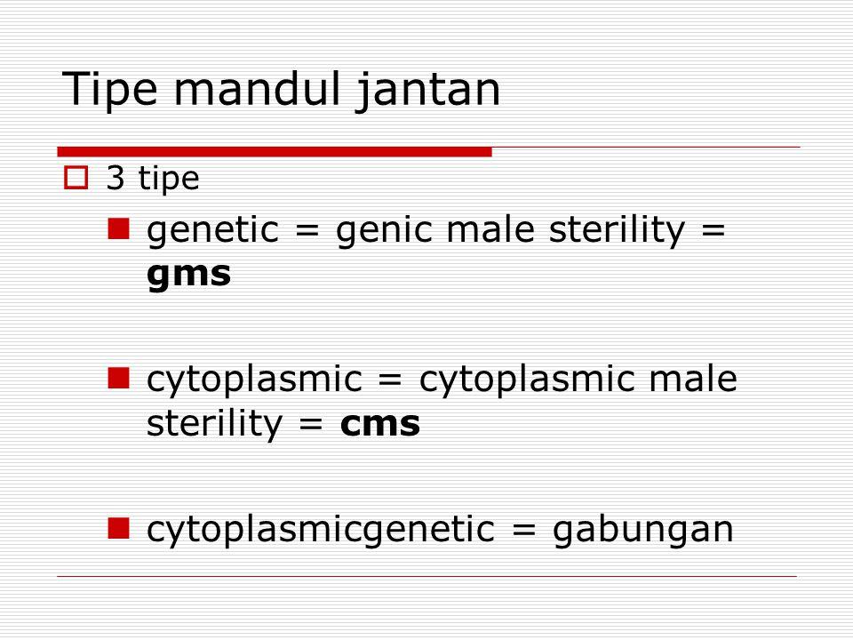 Tipe mandul jantan  3 tipe genetic = genic male sterility = gms cytoplasmic = cytoplasmic male sterility = cms cytoplasmicgenetic = gabungan