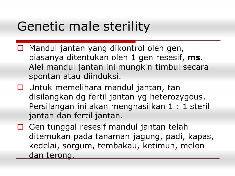 Genetic male sterility  Mandul jantan yang dikontrol oleh gen, biasanya ditentukan oleh 1 gen resesif, ms. Alel mandul jantan ini mungkin timbul seca