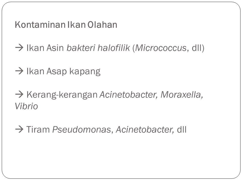 Kontaminan Ikan Olahan  Ikan Asin bakteri halofilik (Micrococcus, dll)  Ikan Asap kapang  Kerang-kerangan Acinetobacter, Moraxella, Vibrio  Tiram