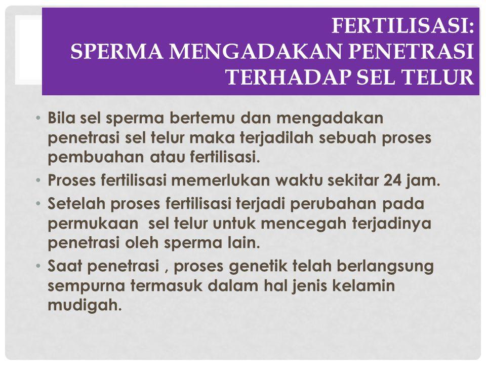 FERTILISASI: SPERMA MENGADAKAN PENETRASI TERHADAP SEL TELUR Bila sel sperma bertemu dan mengadakan penetrasi sel telur maka terjadilah sebuah proses p