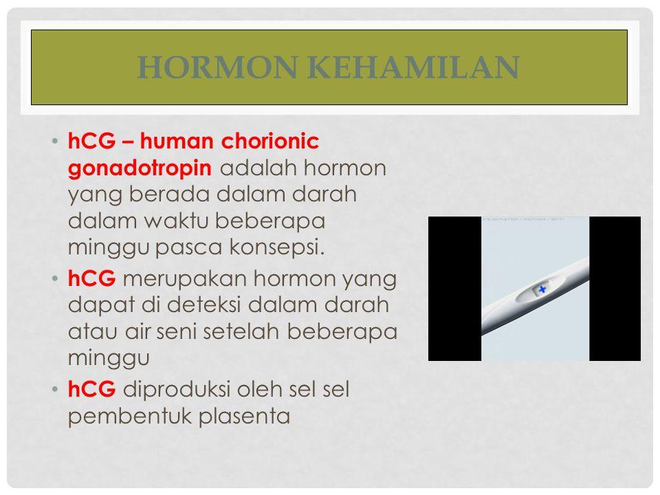 HORMON KEHAMILAN hCG – human chorionic gonadotropin adalah hormon yang berada dalam darah dalam waktu beberapa minggu pasca konsepsi. hCG merupakan ho